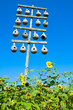 A stand of gourd birdhouses for nesting purple martins