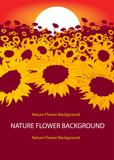Vector nature flower background, beautiful yellow sunflower peta