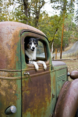 Dog in an Old Truck