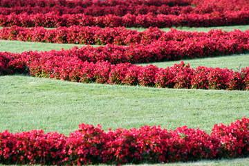aiuola con fiori rossi disposti geometricamente