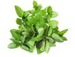 mint grass