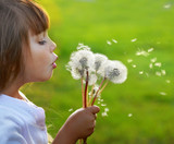 Little girl blowing dandelions on the meadow - Fine Art prints