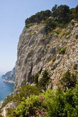 Flowers on Capri Cliffs
