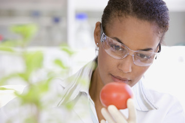 African scientist performing analysis in laboratory on tomato