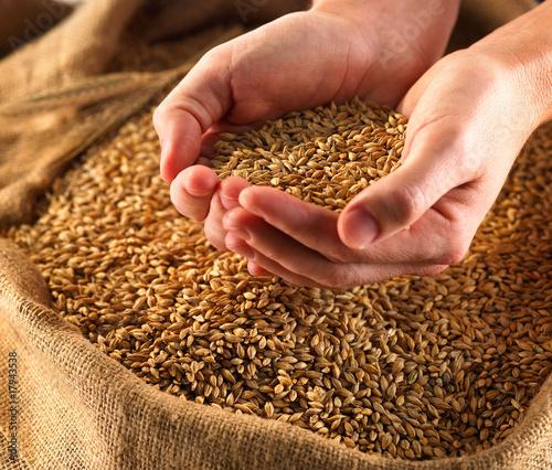 Grain - 17943538