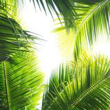 Palmen Dschungel