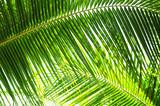 Fototapety Palme in der Sonne