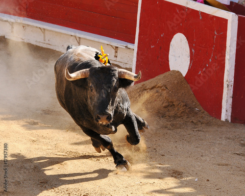 Papiers peints Taurin Mexican Fighting Bull