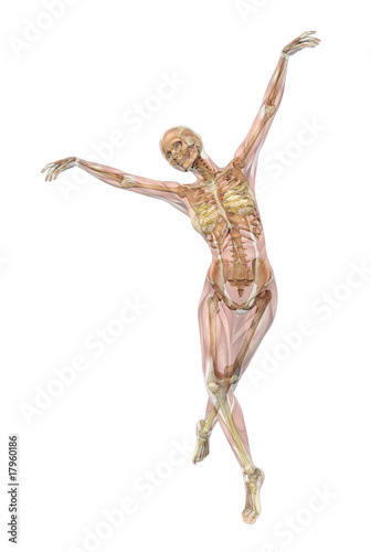 Skeleton with Semi-transparent Muscles - Ballet Pose - 3D render