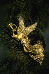 Angel ornament on pine branch