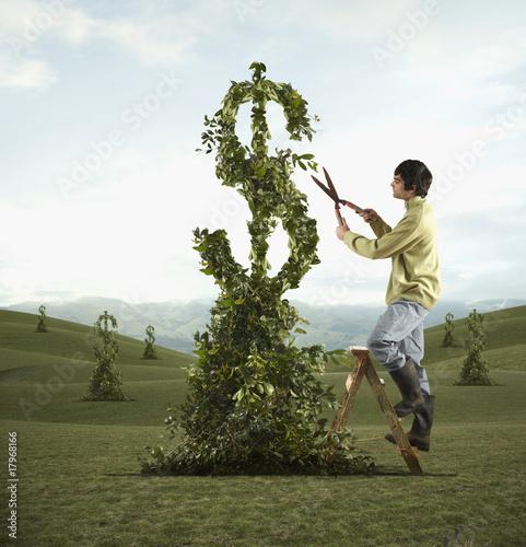 Man pruning dollar sign tree