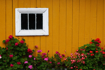 window in a yellow wall and a bed with the flowers