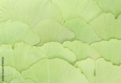 gingko background © SpaPartners