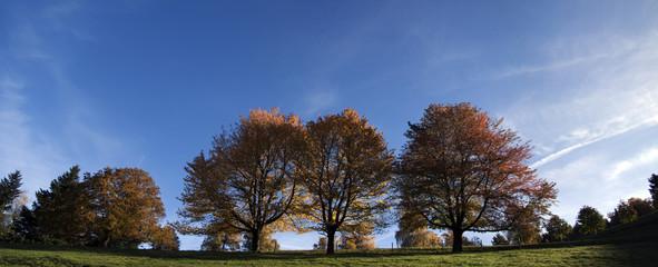 Herbstüpanorama