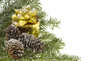 Christmas Gift, nature branch spruce & cones.Isolated on white