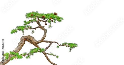 Aluminium Bonsai bonsaï
