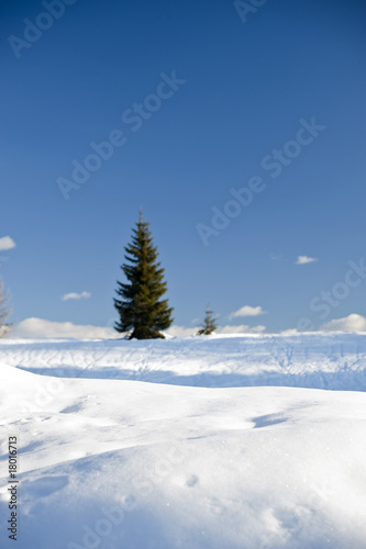 Snow with tree and blue sky