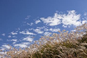 青空の高原