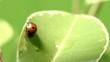 ladybug shot on macro