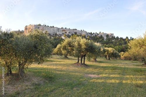 Foto op Plexiglas Olijfboom Champ d'olivier