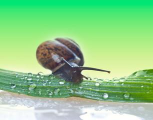 Snail on a fresh leaf