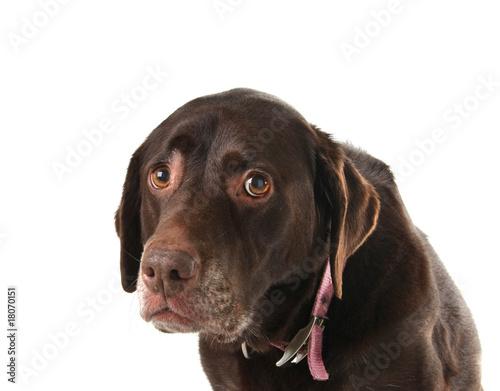 Fototapeten Hunde Sad dog