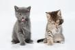 Little Kittens