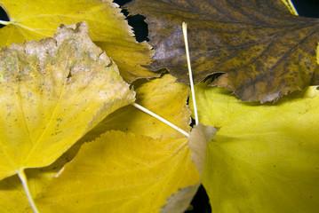 foglie, colori dell'autunno