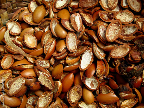 noyaux d'arganier pour production d'huile d'argan