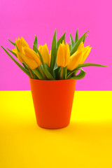 Colorful yellow tulips