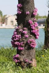 tronco fiorito