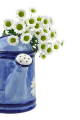 Daisies and Watering Can