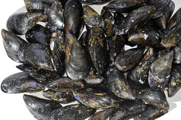 Heap of fresh blue Italian Mussels, Mytilus edulis
