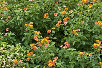 Orange and Pink Wildflowers