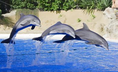Delfines saltando.