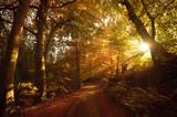 Fototapety Herbstliche Stimmung Sonnenlicht im Wald