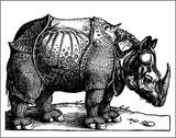 rhino old engraving poster