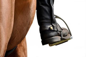 Reitsport, Pferdesport, Reiten, Streigbügel, horse,