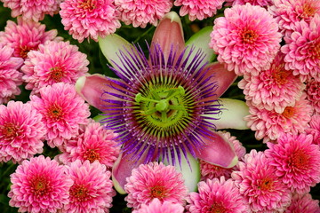 Passionflower composition