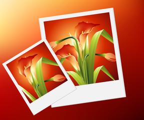 Flowers Illustration 48