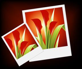 Flowers Illustration 49