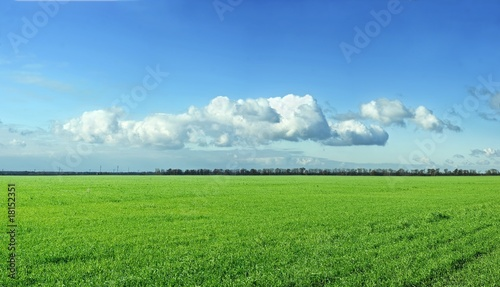 panorama of a green field