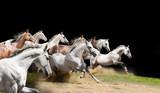 purebred horses herd on black poster