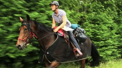 Reiten Trab Eile Pferd