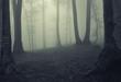 Fog in dark forest