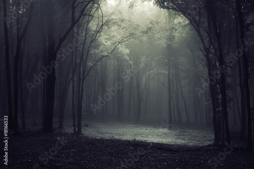 canvas print picture Light in the forest