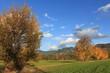 Herbst_Rankweil