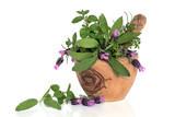 Lavender Flowers and Herb Leaves