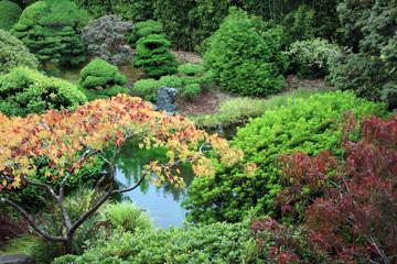 Beautiful Pond at the Japanese Tea Garden of San Francisco