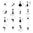Black cats silhouette for your design